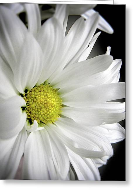 Soft Petals Greeting Cards - White Petals Greeting Card by Julie Palencia