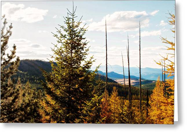 Outlook Greeting Cards - White Pine Greeting Card by Troy Stapek