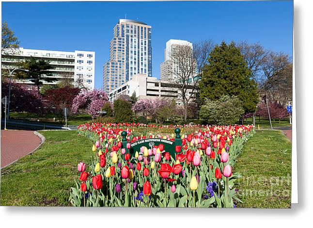 Westchester County Greeting Cards - White Plains Beautification Foundation Garden Greeting Card by Clarence Holmes