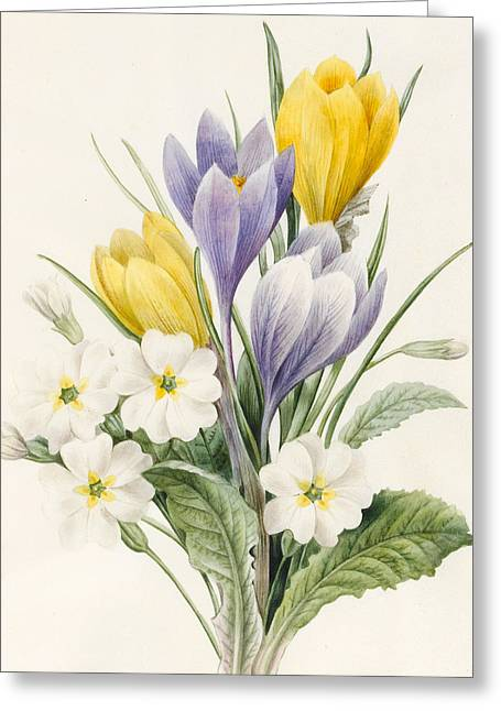 Crocus Flower Greeting Cards - White Primroses and Early Hybrid Crocuses Greeting Card by Louise D