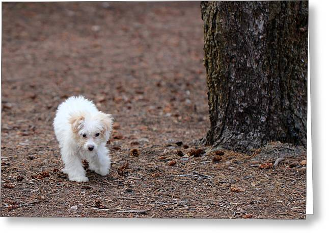Puppies Photographs Greeting Cards - White Puppy Greeting Card by Lorraine Baum