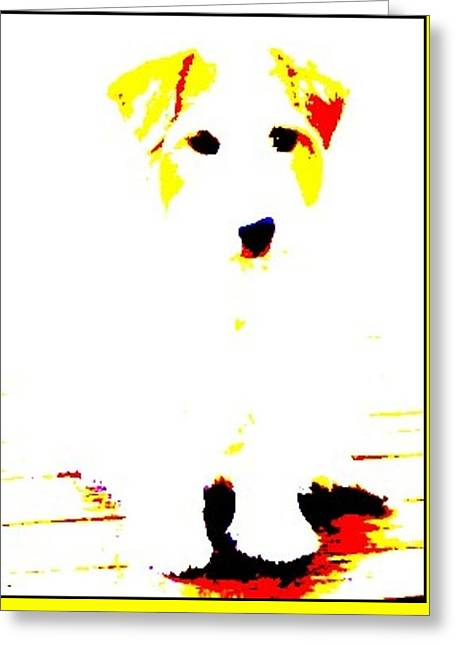 Greeting Cards - White Puppy Greeting Card by VIVA Anderson