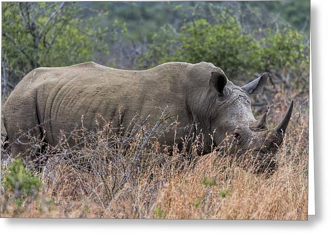 White Rhino Greeting Card by Stephen Stookey