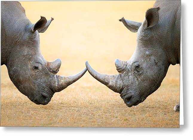 Parks And Wildlife Greeting Cards - White Rhinoceros  head to head Greeting Card by Johan Swanepoel