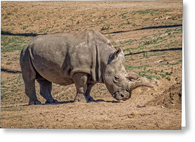 One Horned Rhino Greeting Cards - White Rhinoceros Greeting Card by Patti Deters
