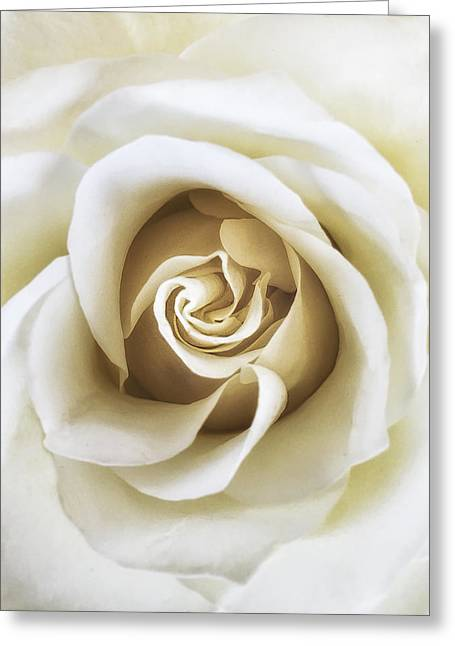 White Rose Greeting Card by Andrew Soundarajan