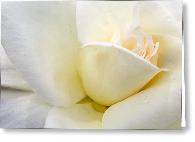 Rose Petals Greeting Cards - White Rose Macro Greeting Card by Martin Wall