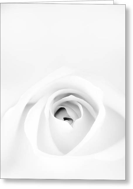 Vignette Greeting Cards - White Rose Greeting Card by Scott Norris