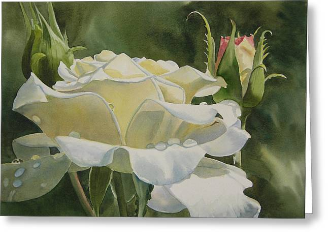 White Roses Greeting Cards - White Rose with Raindrops Greeting Card by Sharon Freeman