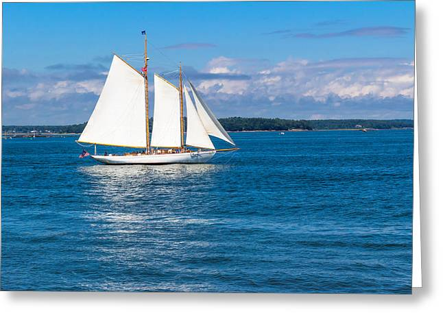 Coastal Maine Greeting Cards - White Sails Greeting Card by Laurie Breton