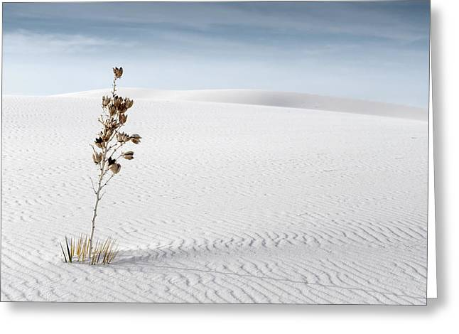 Americana Landscapes Greeting Cards - White Sands Greeting Card by Mike Irwin