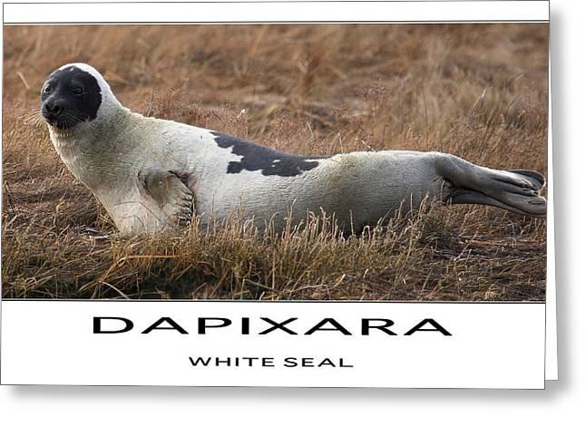 Sea Life Posters Greeting Cards - White Seal  Greeting Card by Dapixara Art