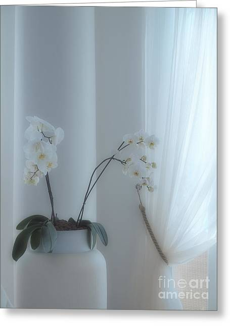 White Curtain Greeting Cards - White Series Soft Greeting Card by Joyce Hutchinson