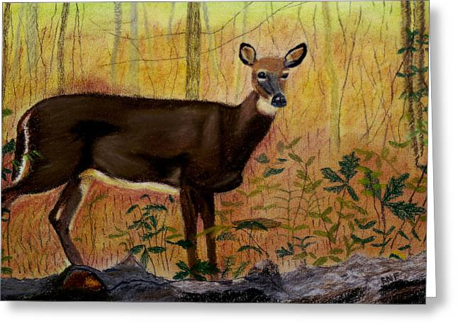 White Tail Pastels Greeting Cards - White Tail Doe Greeting Card by Raymond Farrimond