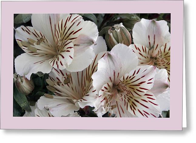 Lily Of The Incas Greeting Cards - White Tiger Azalea Greeting Card by Ben and Raisa Gertsberg