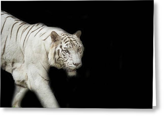 The Tiger Greeting Cards - White Tiger Greeting Card by Jijo George
