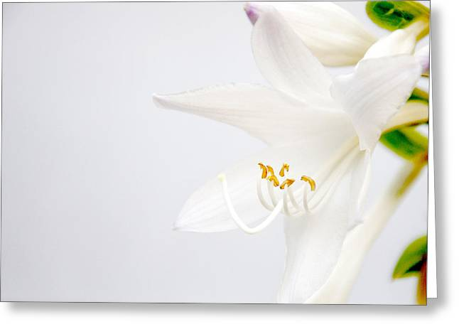 Virtuous Greeting Cards - White Greeting Card by Tom McCarthy