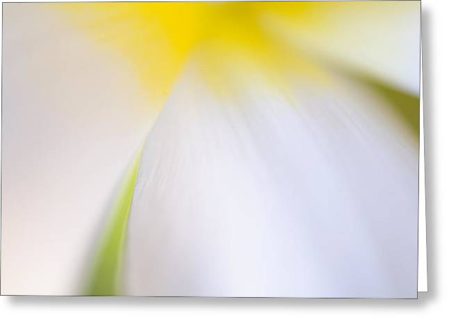 Decorativ Photographs Greeting Cards - White Tulip Detail Greeting Card by Silke Magino