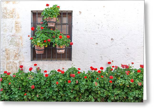 Catherine White Greeting Cards - White Wall and Red Flowers Greeting Card by Jess Kraft