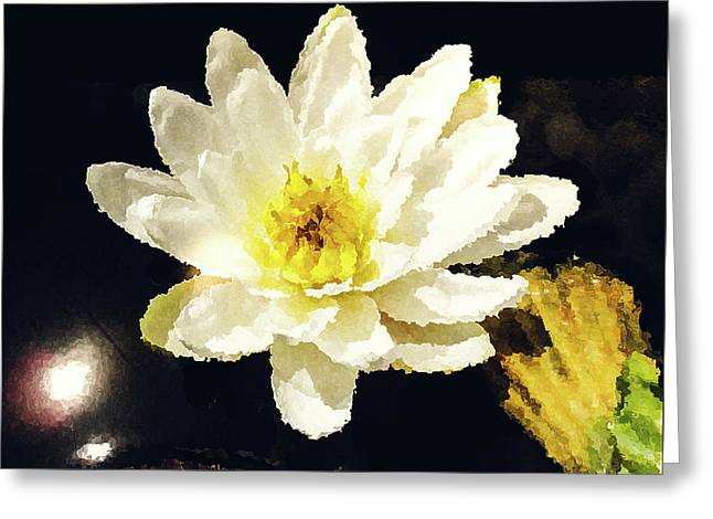 White Water Lily Greeting Card by Mona Stut