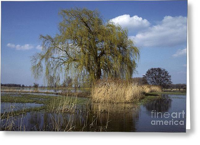 Spring Floods Greeting Cards - White Willow Greeting Card by Jean-Louis Klein & Marie-Luce Hubert