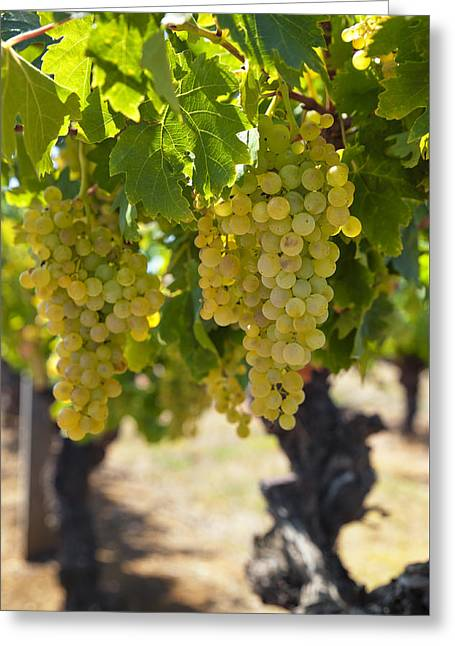 Nature Greeting Cards - White Wine  Greeting Card by Ulrich Schade