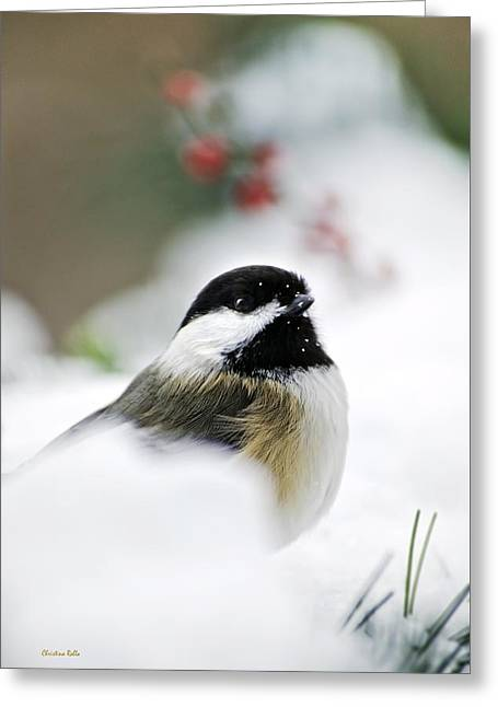 White Winter Chickadee Greeting Card by Christina Rollo