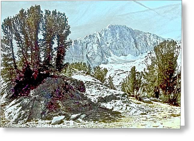 Whitebark Pines Greeting Cards - Clarks Nutcracker Country Greeting Card by Scott L Holtslander