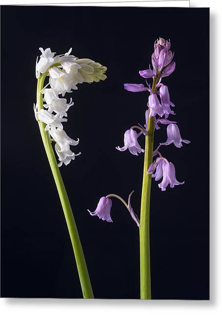 Best Seller Greeting Cards - Whitebells Pinkbells Greeting Card by Jon Delorme