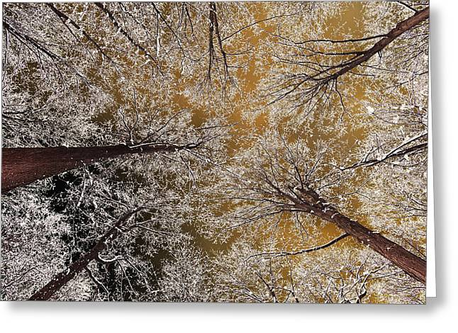 Whiteout Greeting Card by Tony Beck