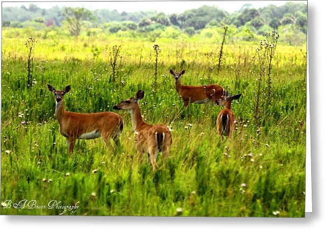 Whitetail Deer Family Greeting Card by Barbara Bowen