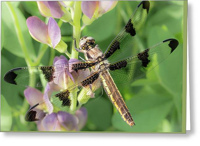Whitetail Dragonfly On False Indigo Greeting Card by Jim Hughes