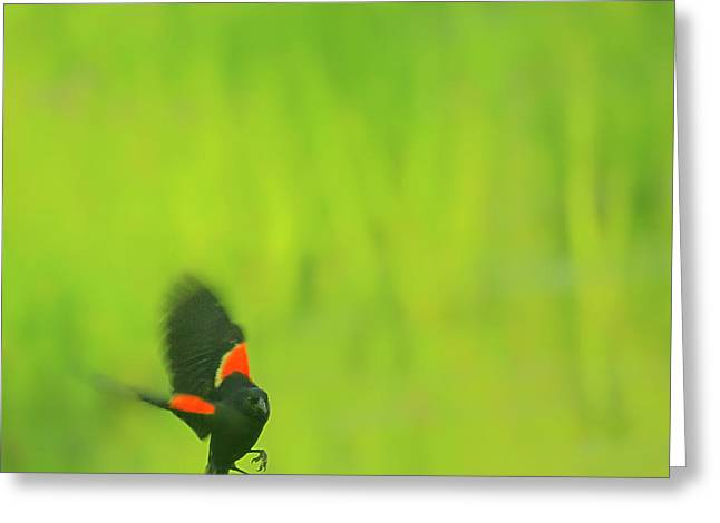 Who are you looking at Greeting Card by Aimelle