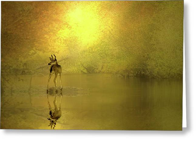 Who Is There Greeting Card by Diane Schuster