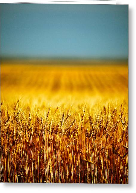 Whole Wheat Greeting Card by Todd Klassy