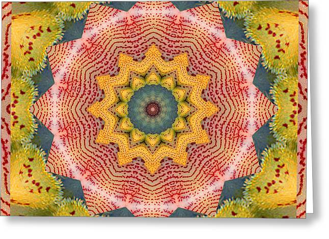 Garden Mandala Greeting Cards - Wholeness Greeting Card by Bell And Todd