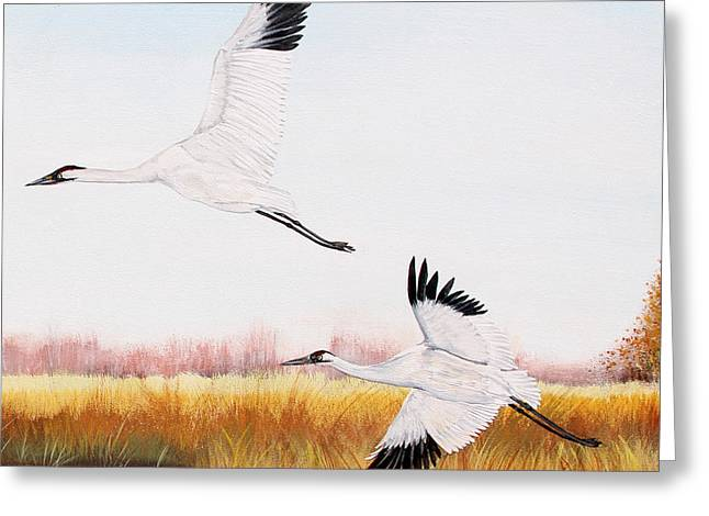 Willow Lake Greeting Cards - Whooping Cranes-JP3155 Greeting Card by Jean Plout