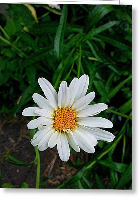 Recently Sold -  - March Greeting Cards - Whoopsie Daisy Greeting Card by John Savala