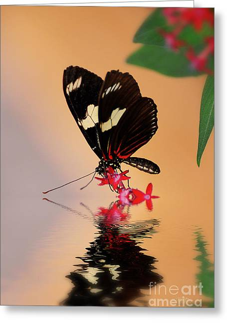 Butterfly On Flower Greeting Cards - Whos A Pretty Boy Greeting Card by Lois Bryan