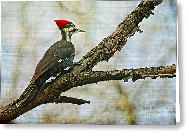 Pileated Woodpecker Greeting Cards - Whos There Greeting Card by Lois Bryan