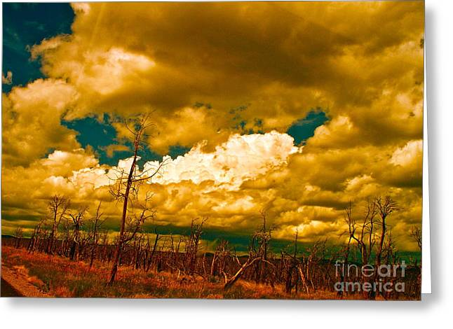 Forest Fire Greeting Cards - Why the Desert Makes Gods Greeting Card by Chuck Taylor