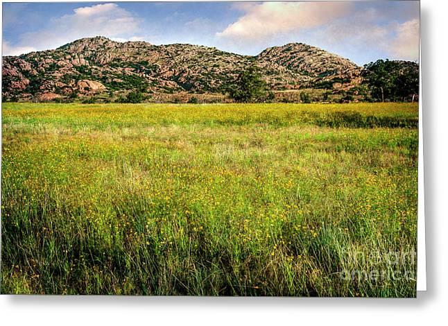 Wichita Mountain Wildflowers Greeting Card by Tamyra Ayles