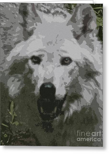 Wolf From The Forest Greeting Cards - Wide Eyes Vision Greeting Card by Debra     Vatalaro