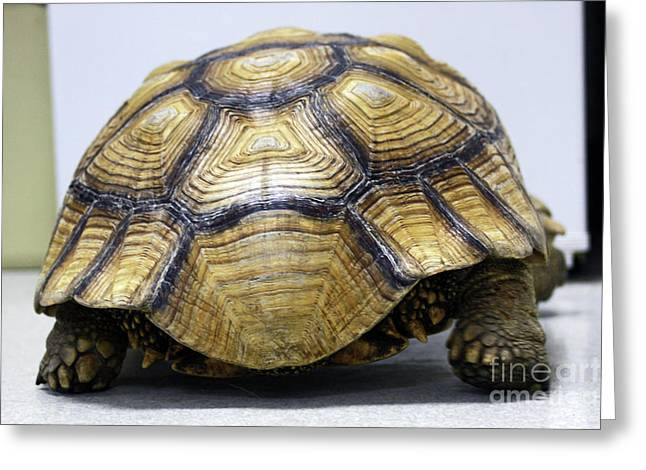 Turtle Shell Greeting Cards - Wide Load Greeting Card by Joy Tudor