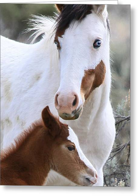 Vale Greeting Cards - Wild Affection Greeting Card by Athena Mckinzie