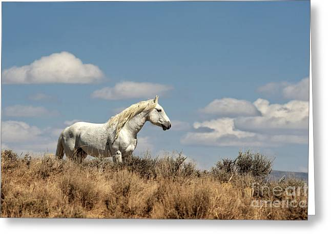 Wild Horses Greeting Cards - Wild and Free Greeting Card by Heather Swan