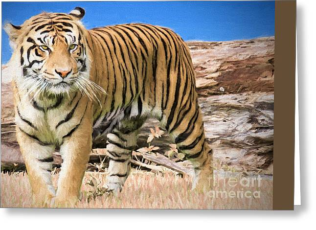 Wild And Untamed Greeting Card by Judy Kay