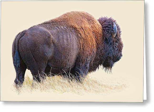 Yellowstone Digital Art Greeting Cards - Wild and Wooly Greeting Card by Dewain Maney
