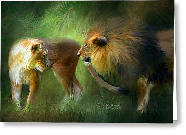 Lioness Greeting Cards - Wild Attraction Greeting Card by Carol Cavalaris
