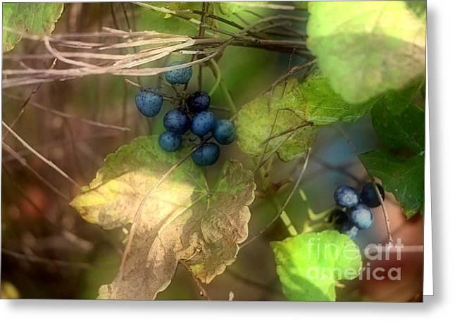 Berry Greeting Cards - Wild Autumn Berries Greeting Card by Jari Hawk